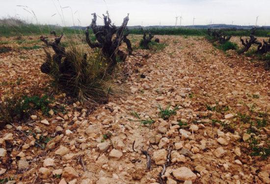 Vins-del-Tros_Vineyard-02