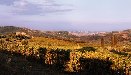 mastrojanni-vineyard-02