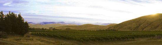 tinpot-hut-vineyard