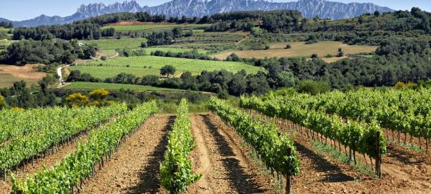 Amós Bañeres Saltamarti 自然農者阿默酒莊 紅酒